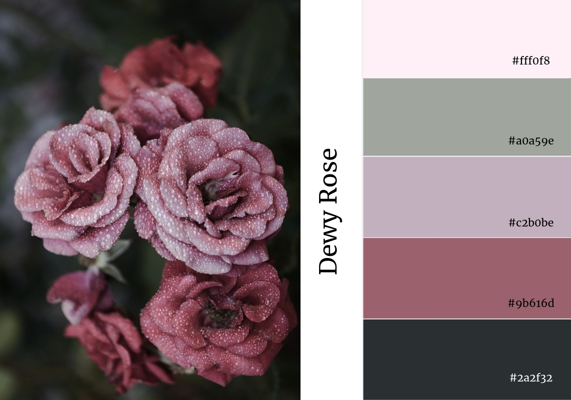 dewy rose colour palette pink